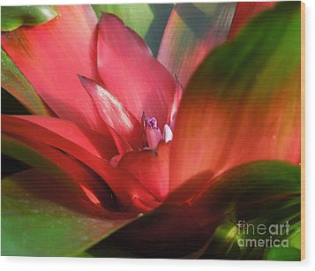 Bromeliad Wood Print by Chad and Stacey Hall