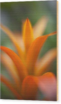 Bromeliad Flow Wood Print by Mike Reid