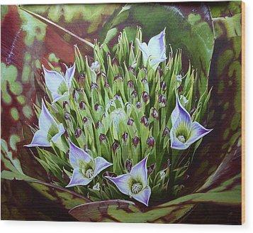 Bromeliad In Bloom Wood Print by Urszula Dudek