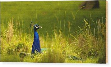 Bronx Zoo Peacock Wood Print