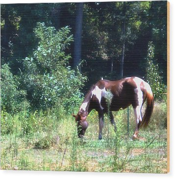 Brown And White Horse Grazing Wood Print by Eva Thomas