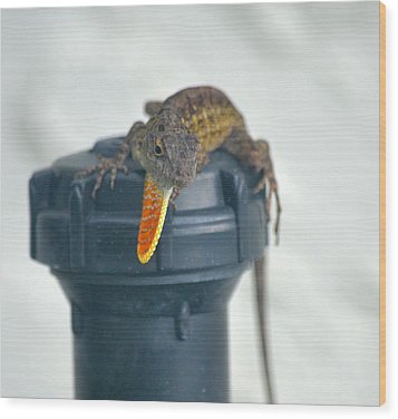 Brown Anole With Dewlap Wood Print by Richard Bryce and Family