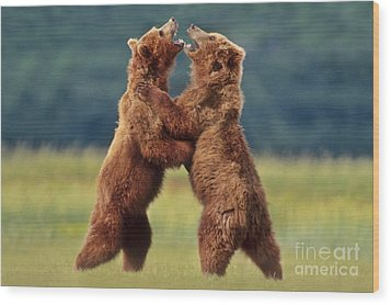 Brown Bears Sparring Wood Print by Frans Lanting MINT Images