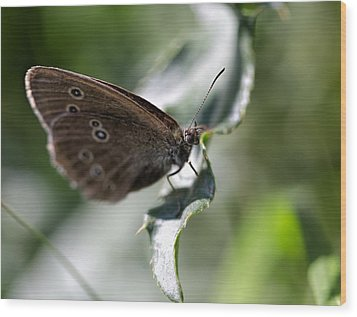 Wood Print featuring the photograph Brown Butterfly On Leaf by Leif Sohlman