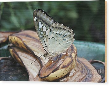 Brown Clipper Butterfly #3 Wood Print