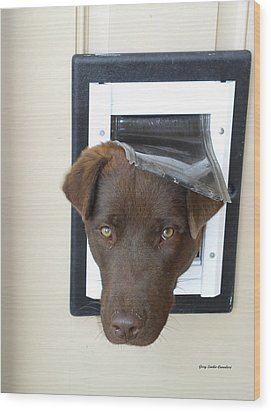 Brown Dog Wood Print by Gary Emilio Cavalieri