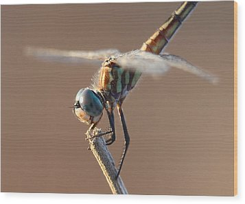 Brown Dragonfly Wood Print