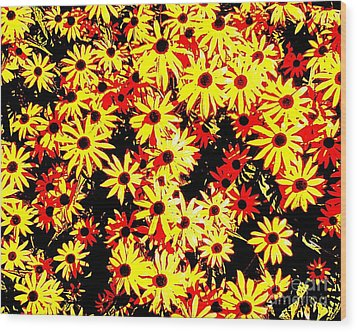 Brown Eyed Susans I Wood Print by Peter Gumaer Ogden