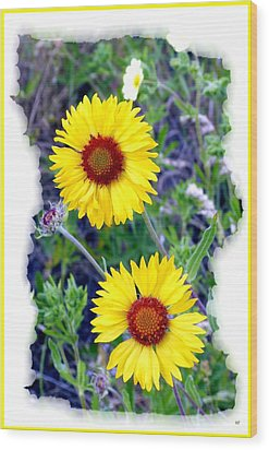 Brown- Eyed Susans Wood Print by Will Borden
