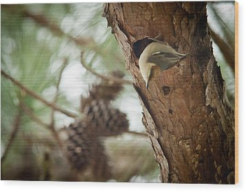 Brown Headed Nuthatch Wood Print by Linda Unger