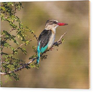 Brown Hooded Kingfisher Wood Print by Craig Brown