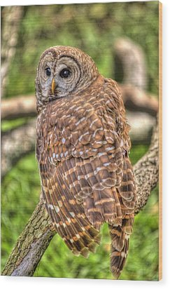 Brown Owl Wood Print