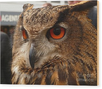 Wood Print featuring the photograph Brown Owl by Vicki Spindler