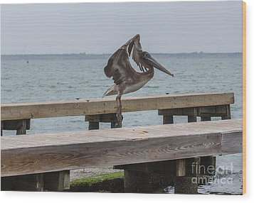 Brown Pelican 1 Wood Print