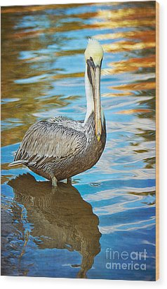 Brown Pelican Along The Bayou Wood Print by Joan McCool
