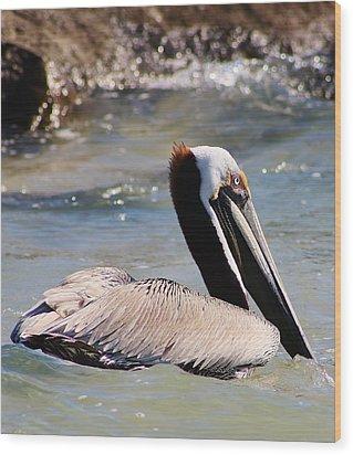 Brown Pelican Wood Print by Bruce Bley