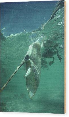Brown Pelican Catching Mullet Wood Print by Tui De Roy