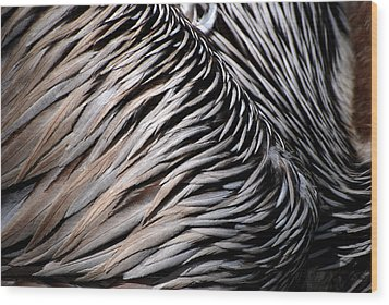 Wood Print featuring the photograph Brown Pelican Feathers by Lorenzo Cassina
