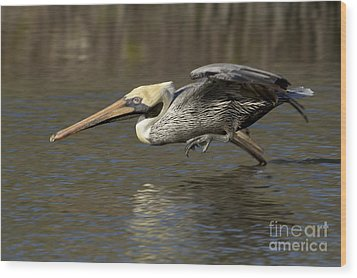 Wood Print featuring the photograph Brown Pelican Fishing Photo by Meg Rousher