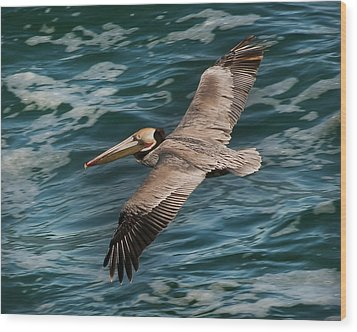 Wood Print featuring the photograph Brown Pelican Flying 1 by Lee Kirchhevel