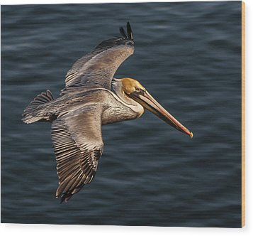 Wood Print featuring the photograph Brown Pelican Flying by Lee Kirchhevel