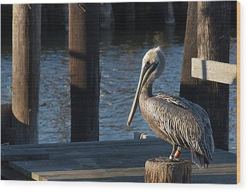 Wood Print featuring the photograph Brown Pelican by Gregg Southard
