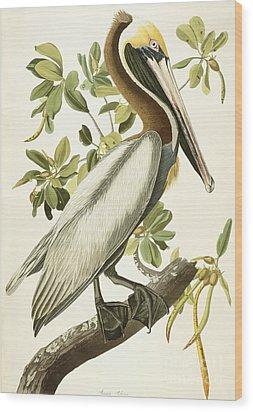 Brown Pelican Wood Print by John James Audubon
