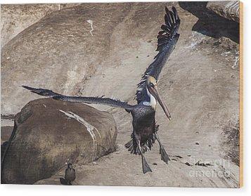 Brown Pelican Landing Wood Print by Darleen Stry