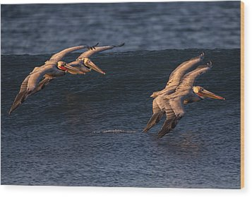 Wood Print featuring the photograph Brown Pelican Pairs 73a2331 by David Orias