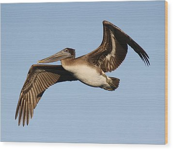 Brown Pelican Wood Print by Paulette Thomas