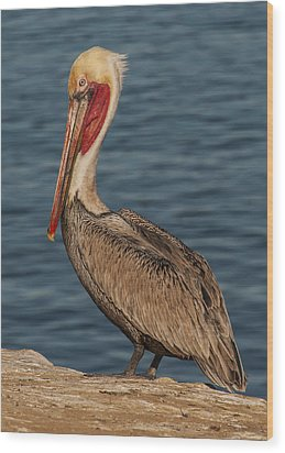 Wood Print featuring the photograph Brown Pelican Portrait 2 by Lee Kirchhevel