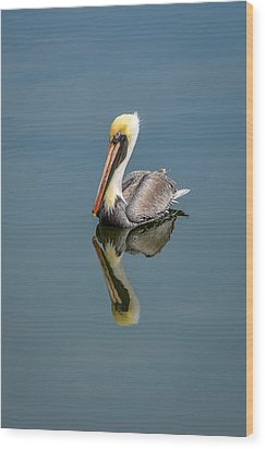 Brown Pelican Reflection Wood Print