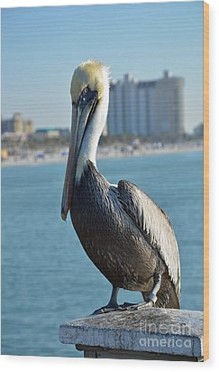 Wood Print featuring the photograph Brown Pelican by Robert Meanor