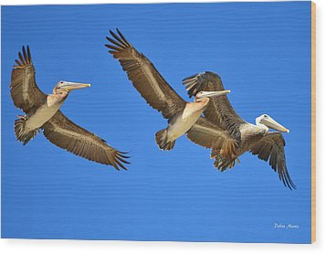 Wood Print featuring the photograph Brown Pelicans In Flight by Debra Martz