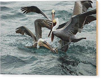 Brown Pelicans Stealing Food Wood Print by Christopher Swann