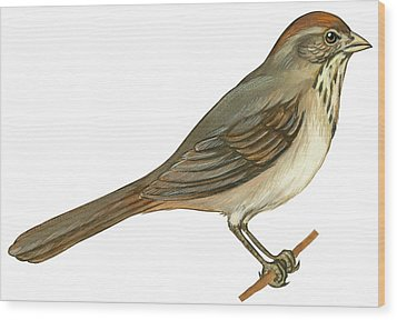 Brown Towhee Wood Print by Anonymous