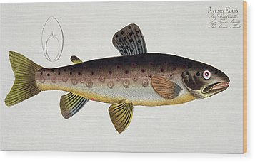 Brown Trout Wood Print by Andreas Ludwig Kruger