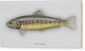 Wood Print featuring the painting Brown Trout - Salmo Trutta Morpha Fario - Salmo Trutta Fario - Game Fish - Flyfishing by Urft Valley Art