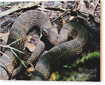 Wood Print featuring the photograph Brown Water Snake by Kathy Baccari