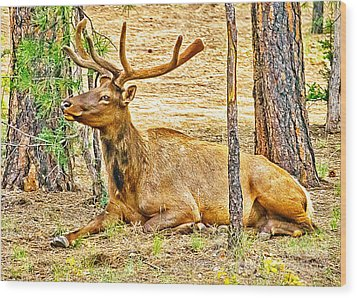 Browsing Elk In The Grand Canyon Wood Print by Bob and Nadine Johnston