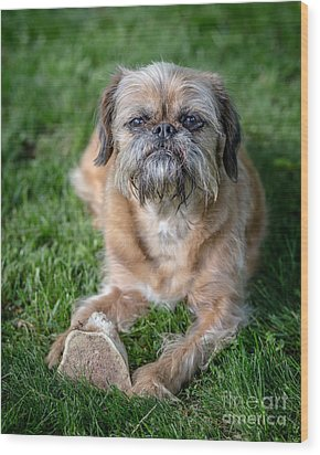 Brussels Griffon Wood Print by Edward Fielding