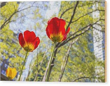 Bryant Park Tulips New York  Wood Print by Angela A Stanton