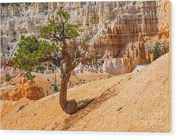 Bryce Canyon Np Wood Print by Juergen Klust