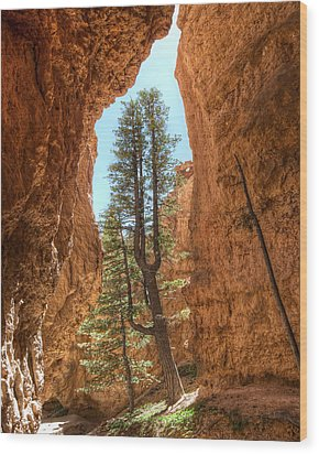Wood Print featuring the photograph Bryce Canyon Trees by Tammy Wetzel