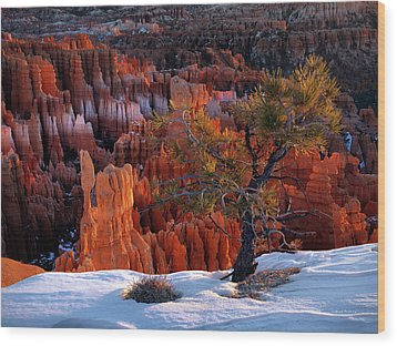 Bryce Canyon Winter Light Wood Print by Leland D Howard