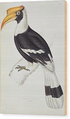 Great Hornbill Wood Print by John Gould