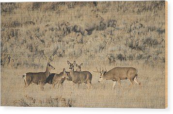 Buck And His Harem Wood Print by Loree Johnson