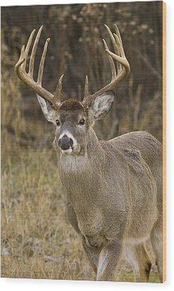 Buck Approaching Wood Print by Larry Bohlin