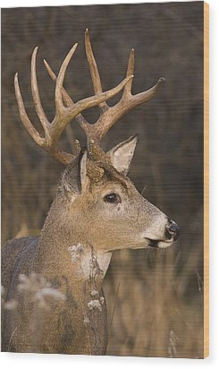 Buck Portrait Wood Print