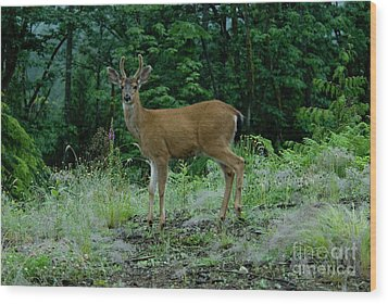 Wood Print featuring the photograph Buck by Rod Wiens